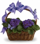 African Violets and Butterflies T92-3
