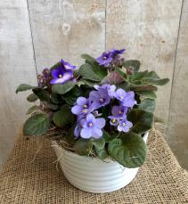 African Violets  Planter