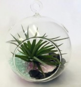 Air Plant Hanging Terrarium