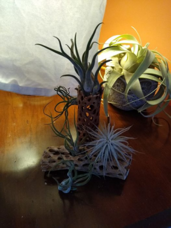 Air Plant Holder wooden receptacle
