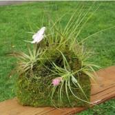 Air Plant Moss Purse Garden Live plants