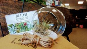 Air Plant Terrarium   in Westlake, OH | D J's Gift & Garden Boutique
