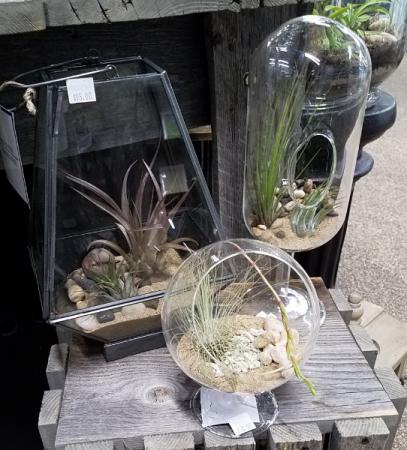 Air Plant Terrarium Plants