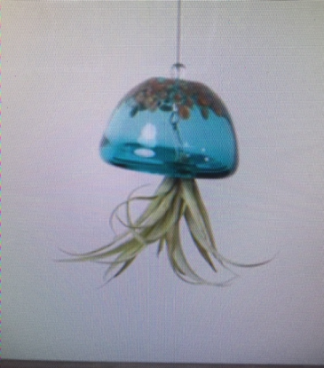 AIR PLANTS / GLASS JELLY Small air plant