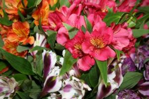 Alice's Pick; Best Blooms of the Day Vase Arrangement in North Adams, MA | MOUNT WILLIAMS GREENHOUSES INC