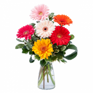 all time favorite gerbera daisies vase arrangement in Lebanon, NH | LEBANON GARDEN OF EDEN FLORAL SHOP