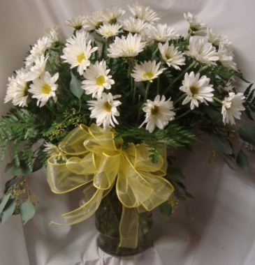 """""""ALL WHITE LONG LASTING DAISIES ARRANGED WITH A CUTE BOW!"""