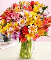 Alluring Alstro Floral Arrangement