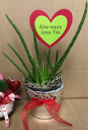 Aloe-ways love you May be added to floral order