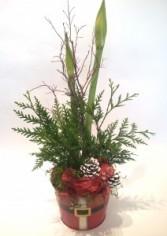 Amarilla Plant in Seasonal Pot Plants