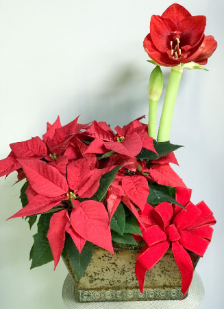 Amaryllis and Poinsettia Plant Basket