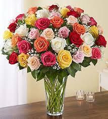 Amazing Delight Roses