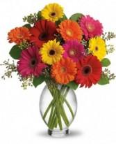 Festive Gerberas vased