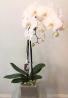 Amazing Orchid plant