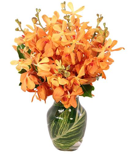 Amber Orchids Floral Design