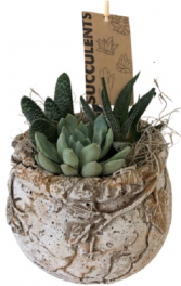 Ancient Succulent Planter  Succulent