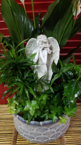 Angel Dish Garden Plants