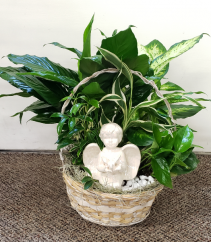 Angel In The Garden Dish Garden Plants (local only)