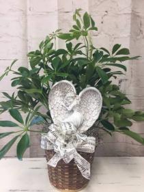 Angel Plant