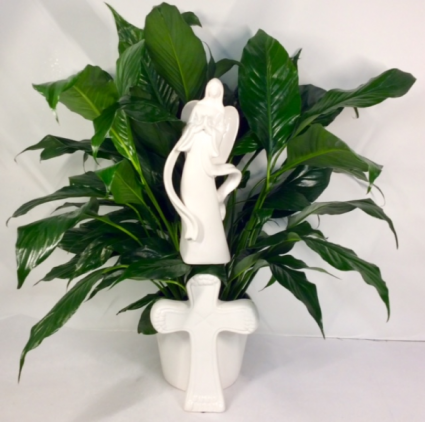 Angelic Comfort Peace Lily