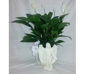 Angelic Peace Lily       FHF-APL1 Plant Keepsake