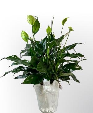 Angels Among Us Plant in Charlottesville, VA   PLANTSCAPES FLORIST INC