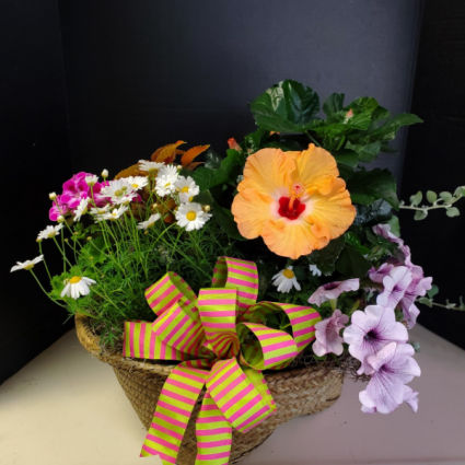 Annual Basket Mixed Annuals