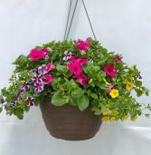 Annual Hanging Basket