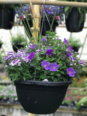 Annual Hanging Basket Hanging Basket in Warsaw, IN | ANDERSON FLORIST & GREENHOUSE