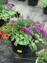 "10"" Annual Patio Pot Flowering Outdoor Annuals"