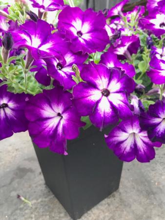 Annual Planter Plant