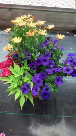 Annual Planter Planter for full sun