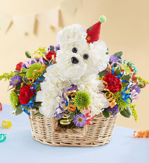 Another Year Rover Now $49.99 Birthday Sale!!! Was $59.99 in Sunrise, FL | FLORIST24HRS.COM