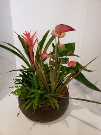 Anthirum planter