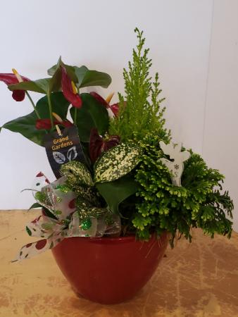 Anthirum planter in red ceramic pot Planter