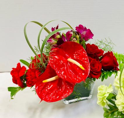 Red Anthurium Heart Valentines