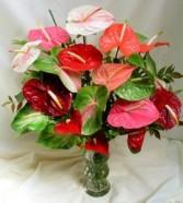 Anthurium Arrangement by Enchanted Florist