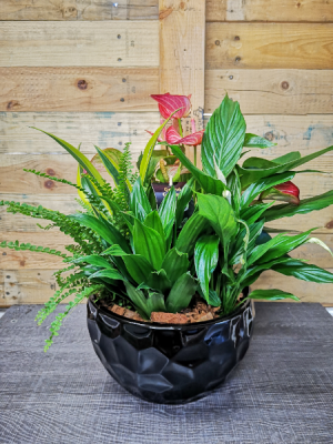 Anthurium Planter  in Windsor, ON | K. MICHAEL'S FLOWERS & GIFTS