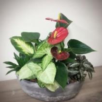 Anthurium Tropical Boat Planter