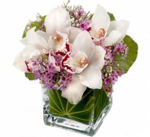Appreciation Orchids  in Edmonton, AB | PETALS ON THE TRAIL