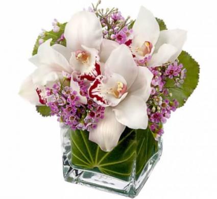 Appreciation Orchids