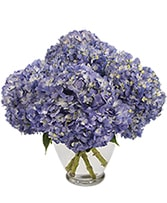 April 1st _ Hydrangea Special