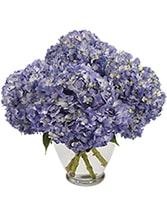 April Hydrangea Special