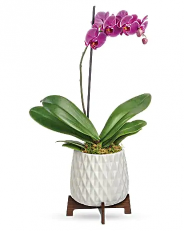 Architectural Orchid Plant