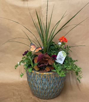 Arizona Breeze Outdoor Plant in Moses Lake, WA   FLORAL OCCASIONS