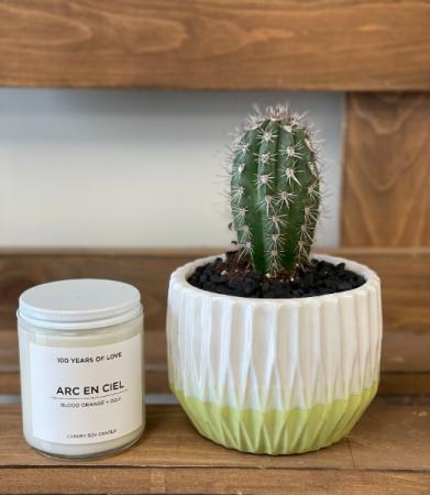 Arizona Sunset Cactus Duo