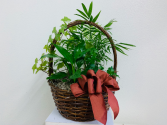 arrowhead (nephthytis), peace lily, ivy planter Plant