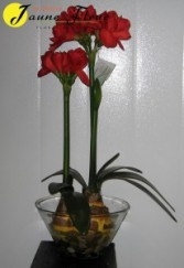 Gift-Artificial Giant Amaryllis