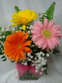 """GERBERA BRIGHTS"" arranged in a cube vase  with baby's breath."