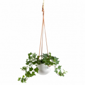 Ashbury Leather Hanging White Ceramic Pot plants